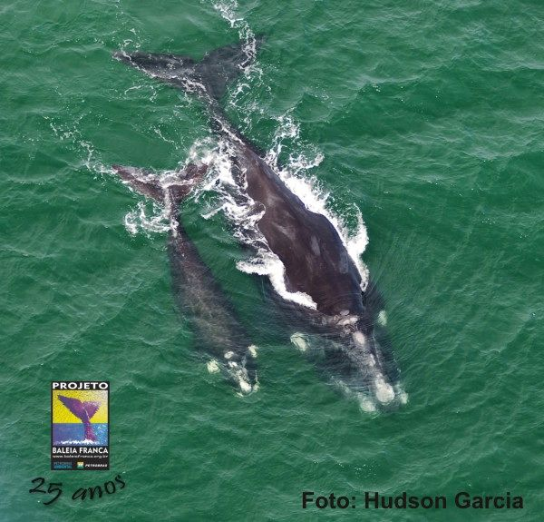 """Chegada das baleias-franca ao litoral motiva exposição """"Projeto Baleia Franca"""""""