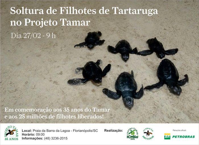 Soltura de filhotes de tartaruga comemora 35 anos do Tamar e 25 milhões de filhotes liberados
