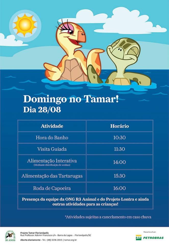Domingo no Tamar tem visita guiada, hora do banho, alimentação das tartarugas e roda de capoeira