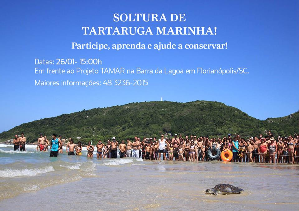 Soltura de tartaruga marinha na Barra da Lagoa - Projeto Tamar